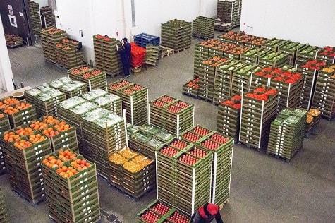 Kalendarz upraw i zbiorów oraz potencjał produkcyjny warzyw